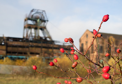 autumn berries derelict industrial coal mine colliery staffordshire chell tunstall chatterleywhitfield pit headstock headgear