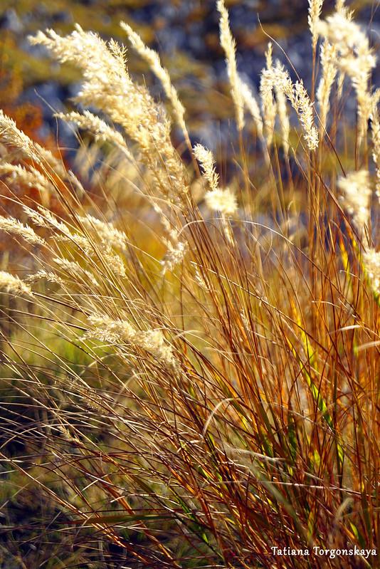 Куст травы, растущий у обочины