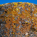 2018 - Mexico - Oaxaca - Zona Arqueológica de Mitla - 5 of 6 por Ted's photos - For Me & You