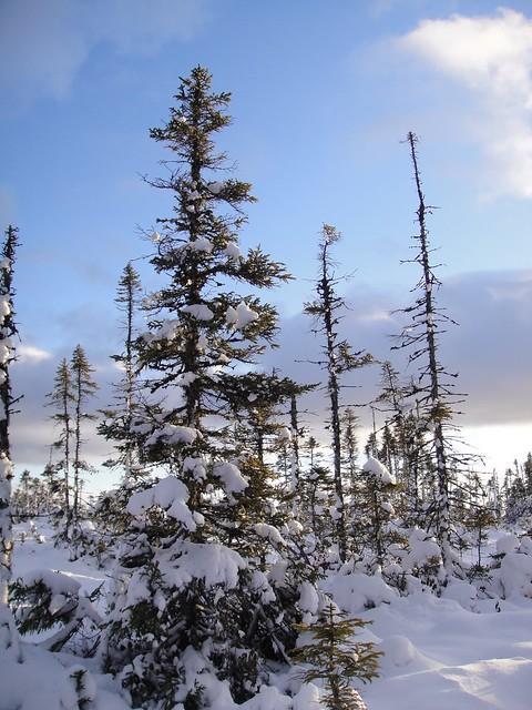 Trees on Bog, Sony DSC-T90