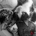 catss 3 by Zainab Zahra