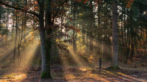 Backlight and Sun Rays