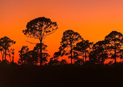 instagram ifttt sunset orange pinetree sillhoutte florida floridastateparks nature landscapephotography landscape ospreyflorida camping hiking