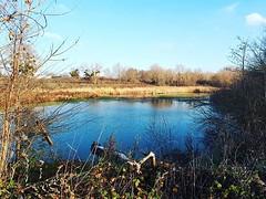 Vue sur la roselière au Parc du Peuple de l'Herbe à Carrières-sous-Poissy
