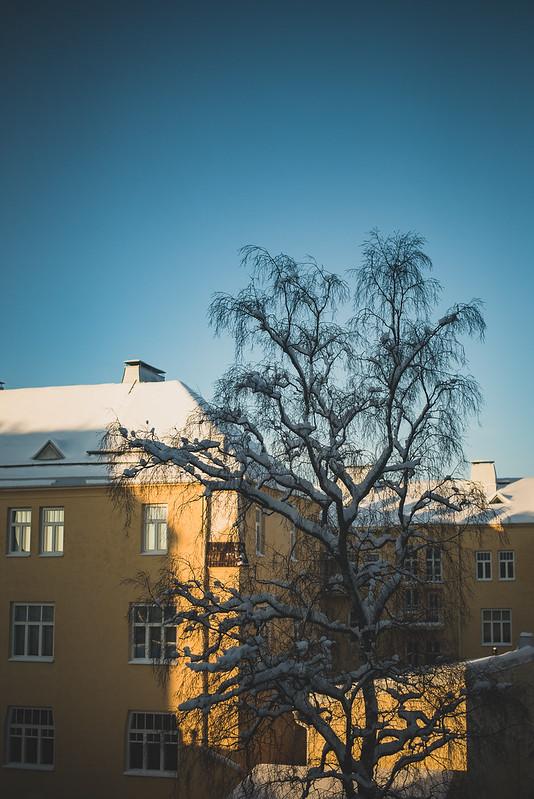Winter sun-4