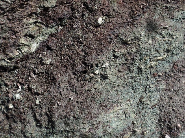 Paleosol (Mill Knob Member, Slade Formation, Upper Mississippian; Clack Mountain Road Outcrop, south of Morehead, Kentucky, USA) 15