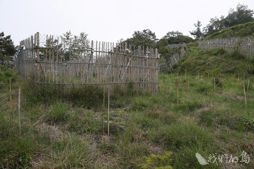 985-2-1丹大林道設圍籬防止動物啃食樹苗 (2)