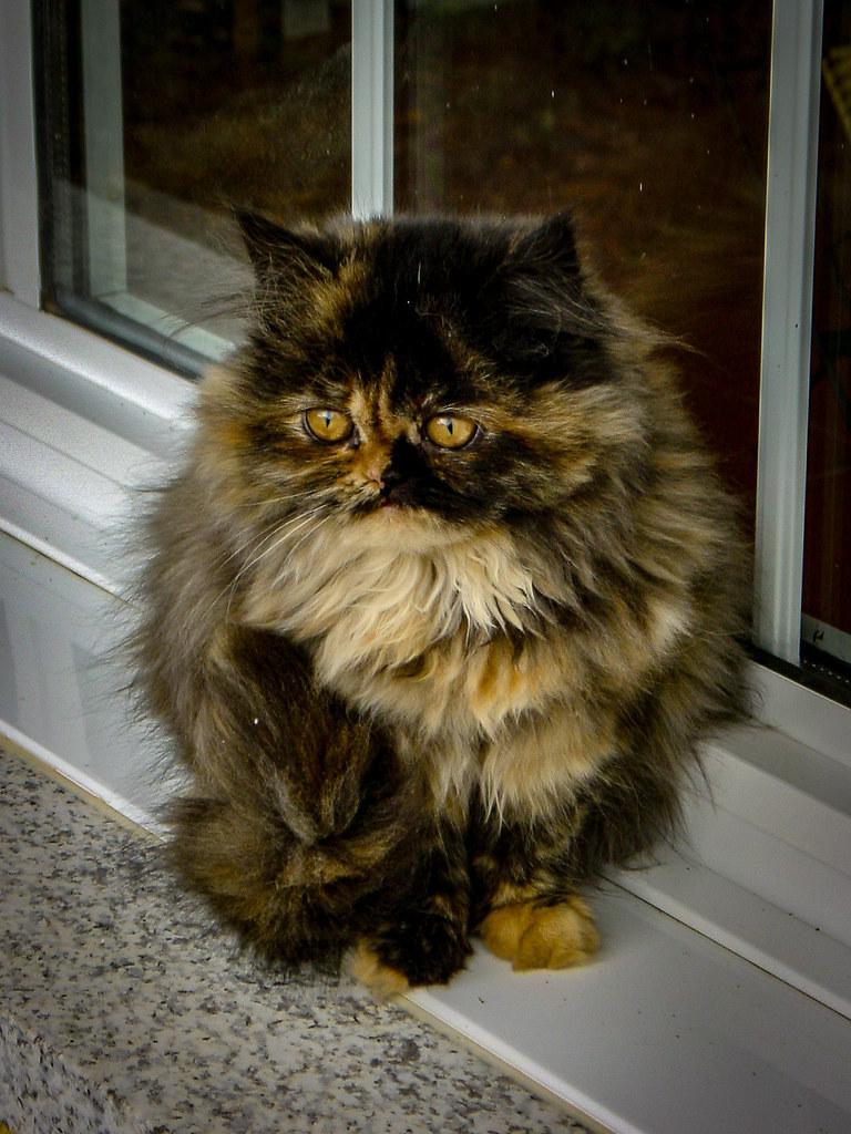 Fotos de animales de todo tipo incluyendo mascotas que más te gustan - Página 13 46308027251_a7ef72ff42_b