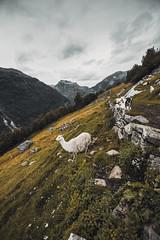 Hills of Geiranger - Norway