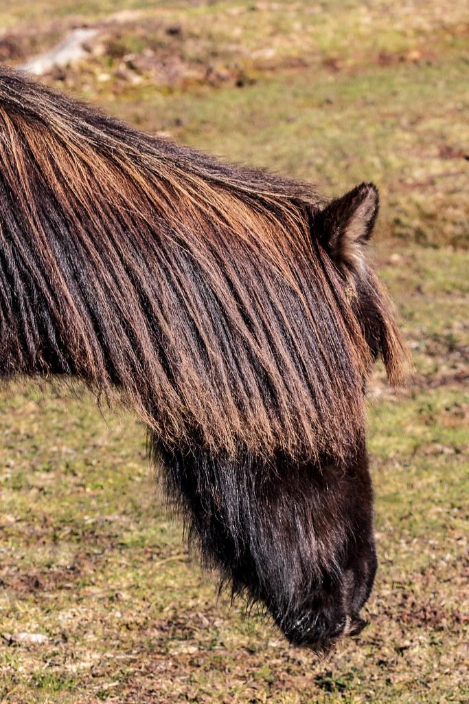 Fotos de animales de todo tipo incluyendo mascotas que más te gustan - Página 15 46666371312_36593bc9a1_b