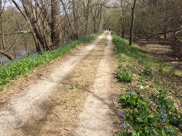 C & O Canal Towpath