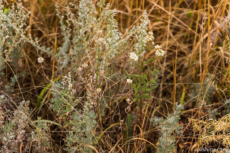 Полевые цветы, Саратовская область