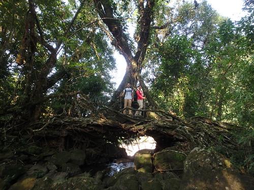 maylynnong-hike-root-bridge