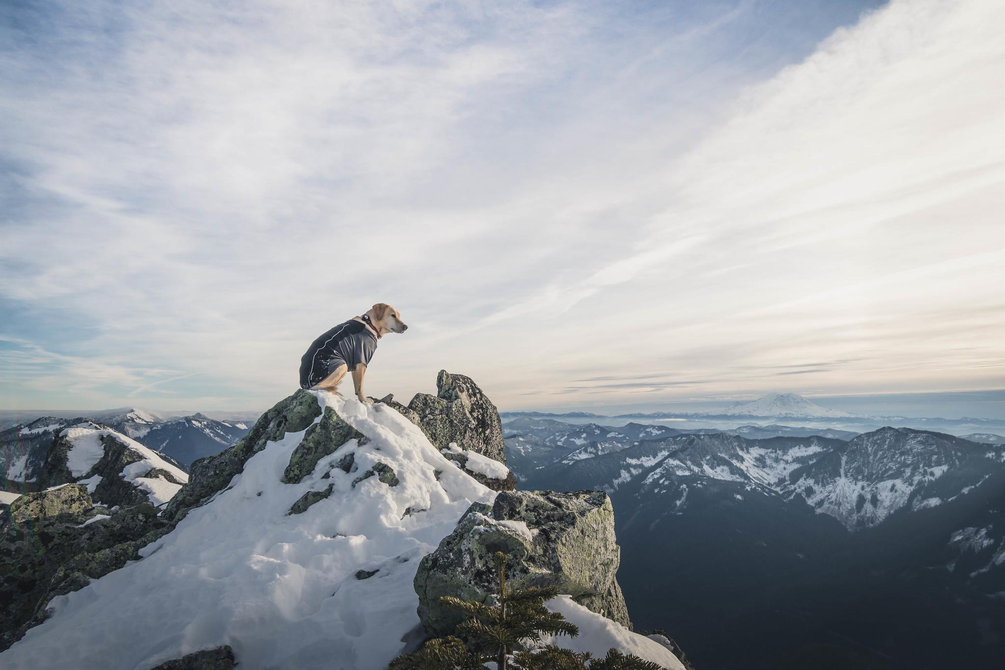 Summit dogs on Web Mountain