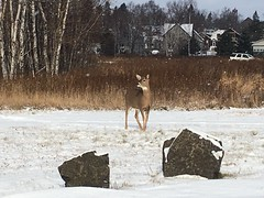2018-11-11 Two Harbors beach light deer