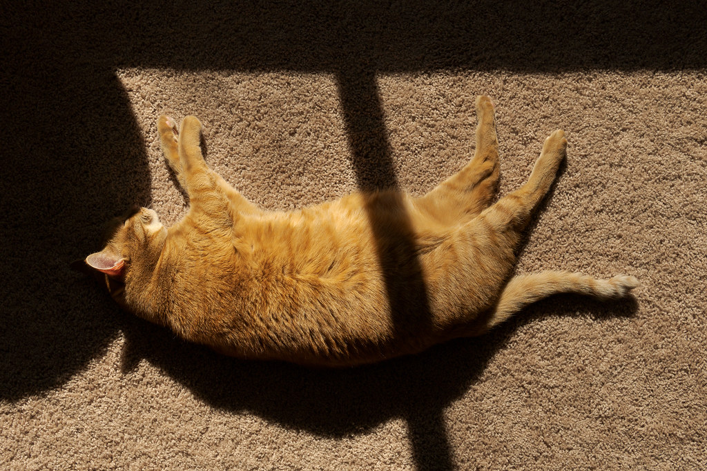 Our orange tabby Sam sleeps on the carpet in the sunshine with a shadow from the window stretching across his body
