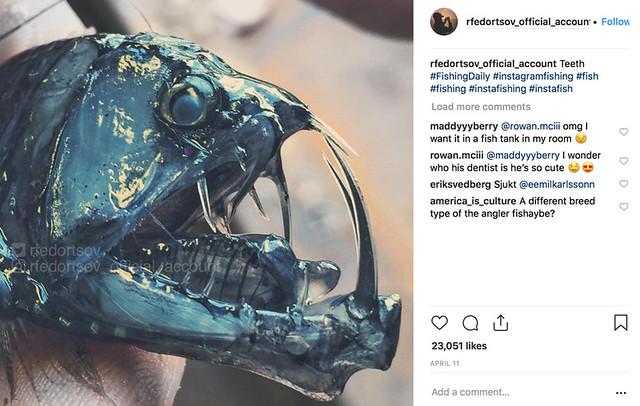 Check out Roman Fedortsov's deep sea creature pics