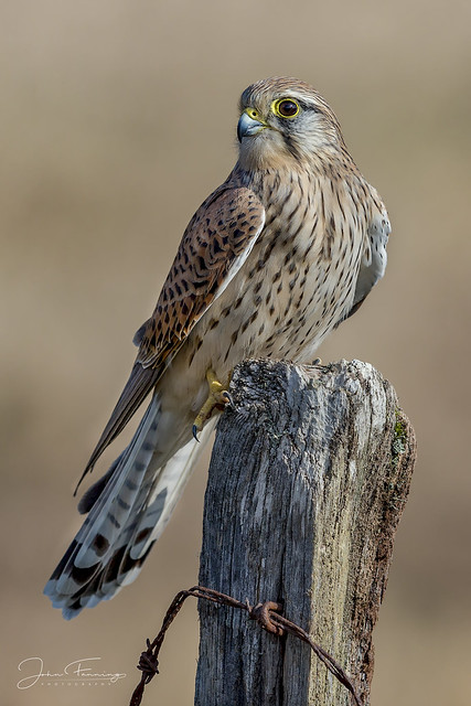 Kestrel Post