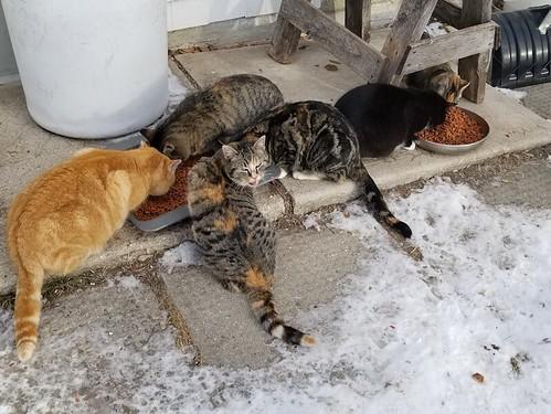 20181215.cats.outside