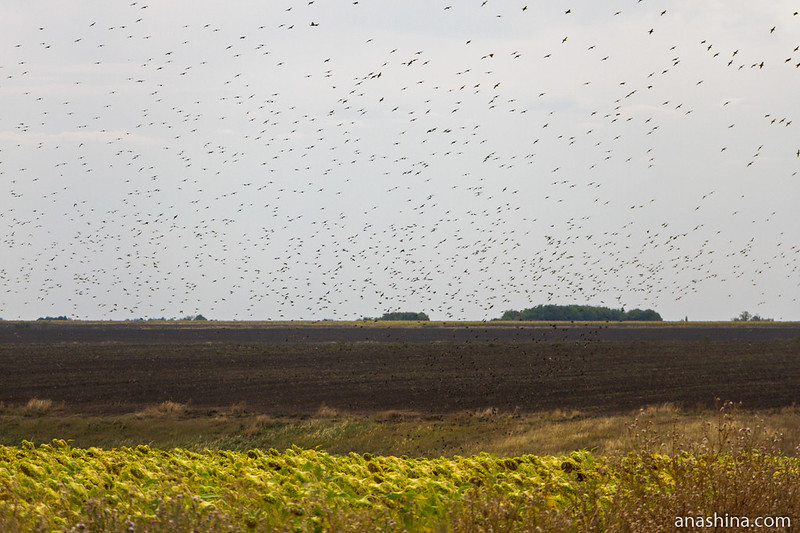 Саратовская область, птицы