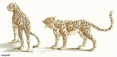 Two leopards by Johan Teyler (1648-1709). Original from The Rijksmuseum. Digitally enhanced by rawpixel.