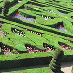 Garden at Villandry Loire by Elaine Robinson