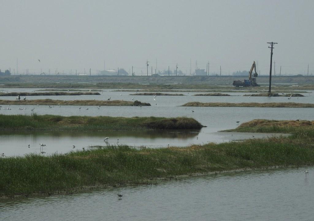 嘉義布袋鹽田光電施工,對鳥況的影響還有待觀察。圖片提供:蔡鵑如