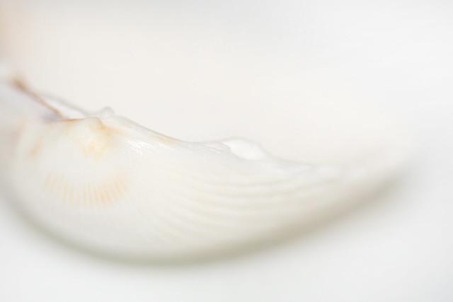 White on White, Nikon D5200, Sigma Macro 105mm F2.8 EX DG OS HSM