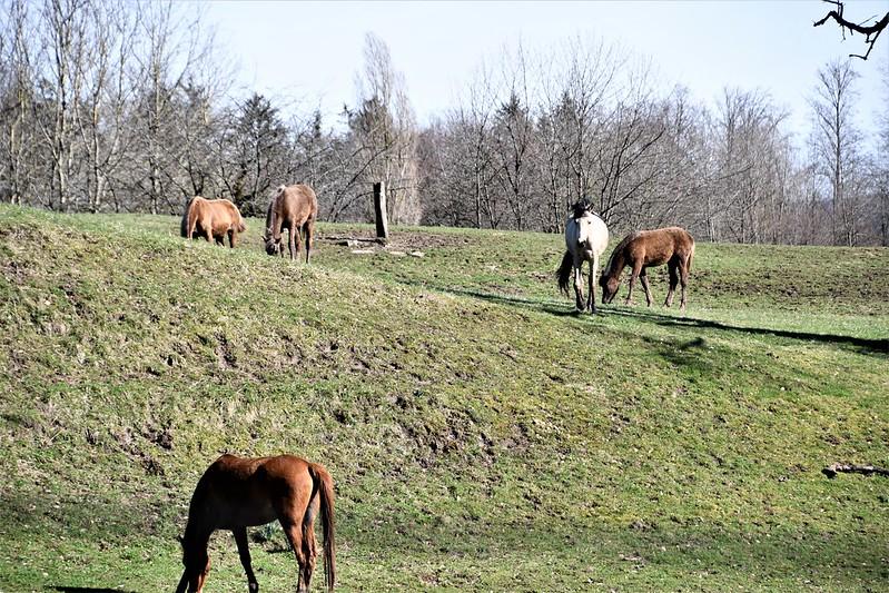 Horses 16.03 (3)
