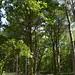 Notton Wood Nature Reserve (152)