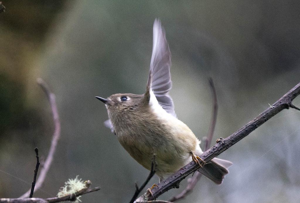Bird 1 (1 of 1)
