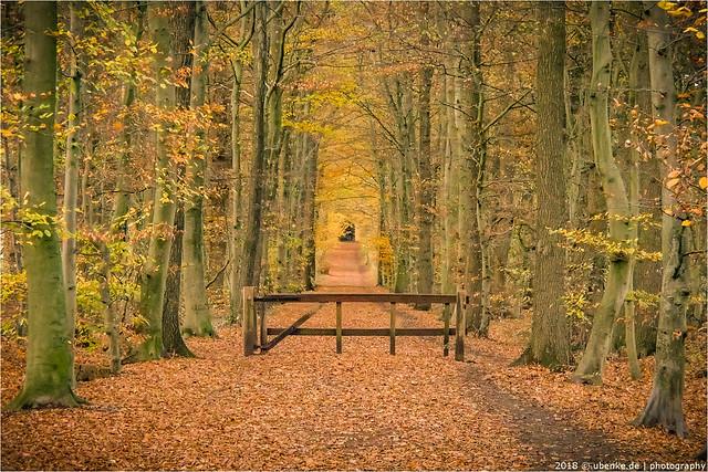 _autumn