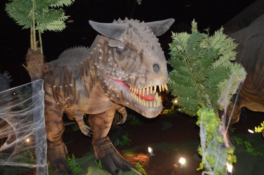 Carnotaurus (meat-eatting bull) photos by Carl klitzke sho