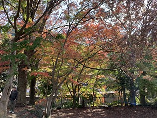 紅葉, 高尾山