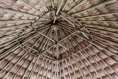 Belized Thatched Roof Palm