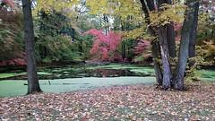 Fall Foliage on the Pond