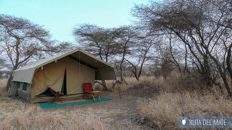 Animales hacer un safari P1140870
