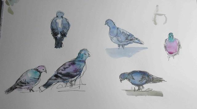 pigeon studies, Canon IXUS 265 HS