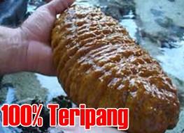 Stokis / Agen QnC Jelly Gamat Batang, Warungasem, Banyuputih, Blado