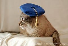 Miaolings in hats