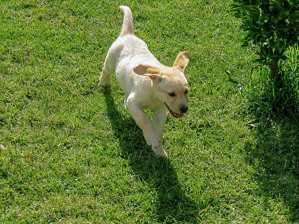 Fotos de animales de todo tipo incluyendo mascotas que más te gustan - Página 14 46264794892_ab6ce5ffca_b