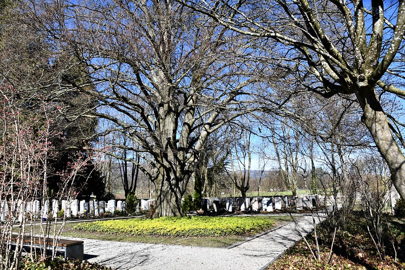 Solothurn cemetery 16.03.2019