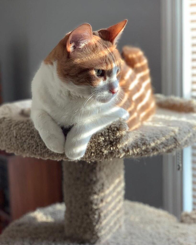 Freddy, an indoor cat