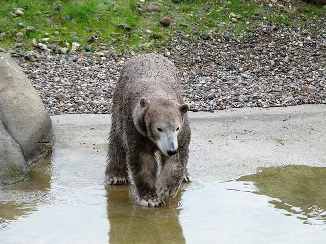 Zoo Rostock 08.11.18