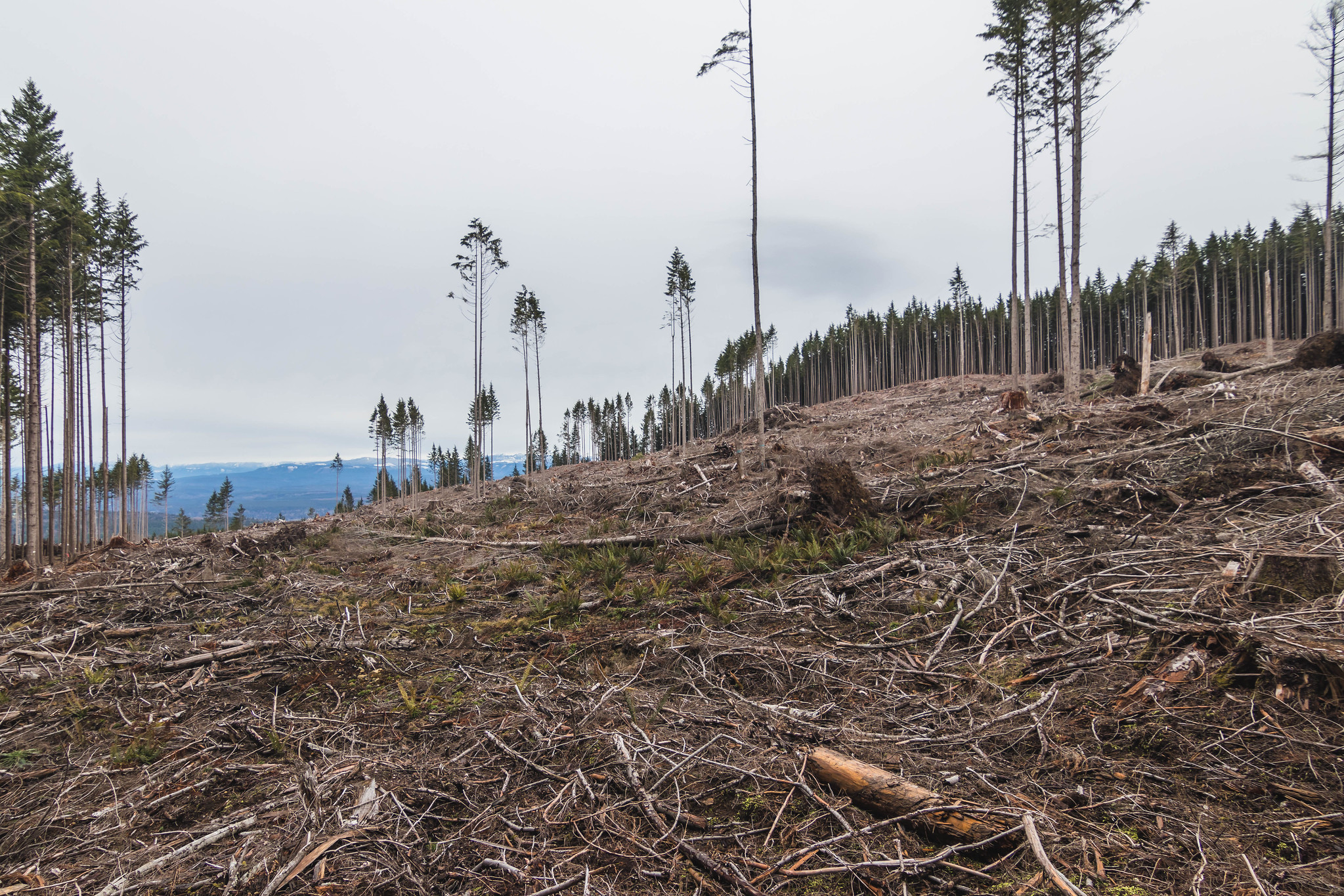 Logging debris