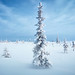 Winter tundra panorama, spruce hoarfrost by czdistagon.com