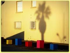 L'ombre du palmier et les cubes colorés au lever du soleil - Photo of Saint-Laurent-de-la-Salanque