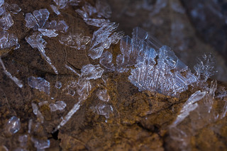 ice crystals growing on a leaf