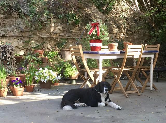Walt on guard duty