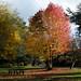 Dulwich Park-16